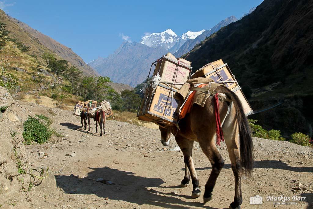 Lastenesel in Nepal