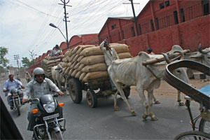 Karren auf Indiens Strassen