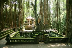 Bali Affenwald