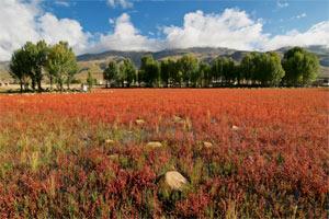 Landschaft bei Daocheng