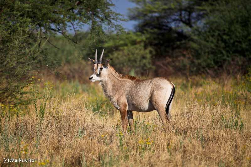 Wild auf der Frans Indongo Lodge